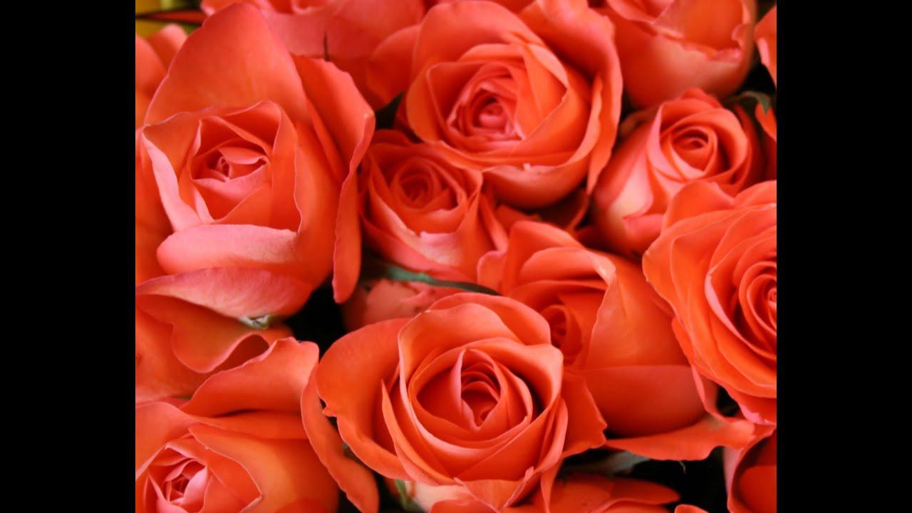 Orange Rose Live Wallpaper
