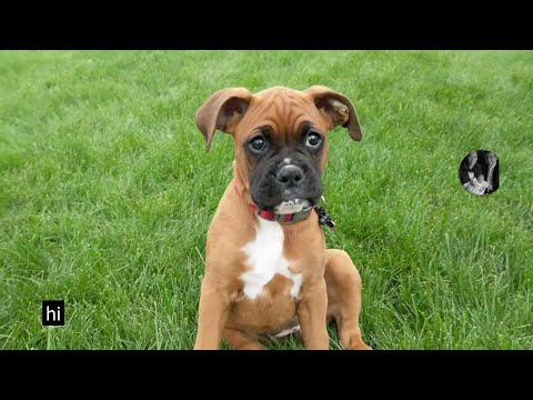 if-you-love-cute-puppies-and-adventure,-you-will-love-marley.-link-to-favorite-video-in-description