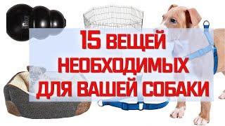ЧТО НУЖНО ЧТОБЫ ЗАВЕСТИ СОБАКУ | 15 маст-хевов || Анетта Будапешт
