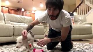 Teaching A Puppy Some Cool Things