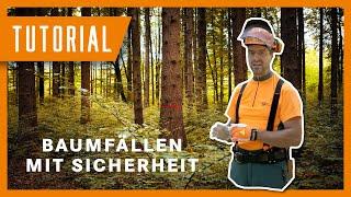 Fällung eines Baumes mit der Sicherheitsfälltechnik | Tutorial der Bayerischen Staatsforsten