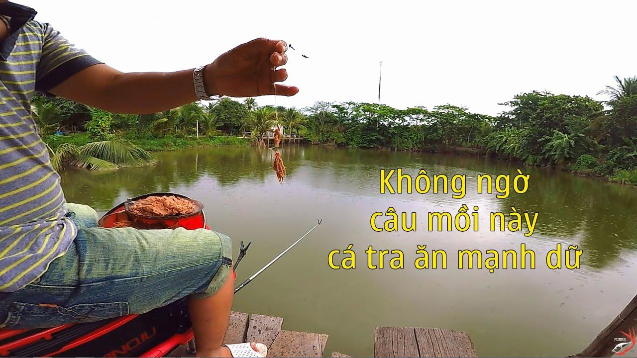 FISHING . TRỘN MỒI CÂU CÁ LINH AI NGỜ CÁ TRA CŨNG ĂN MẠNH.