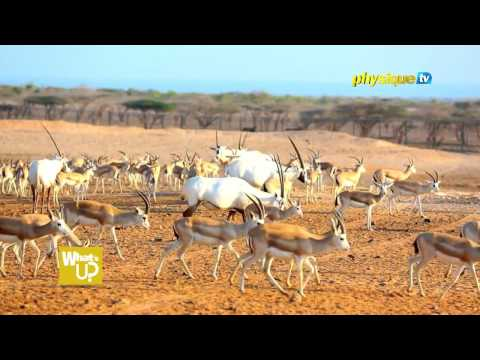 On The Go - Discover Wildlife Safari and Nature Walk at Sir Bani Yas Island