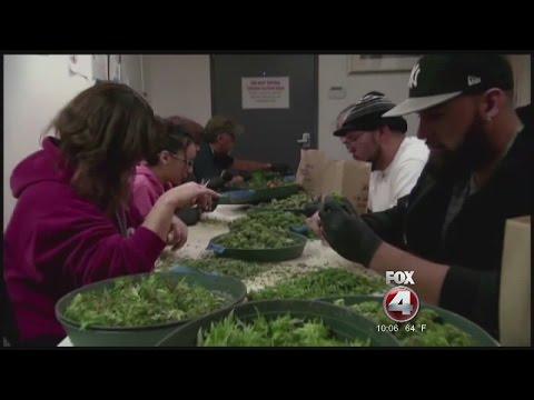 Bonita Springs medical marijuana moratorium