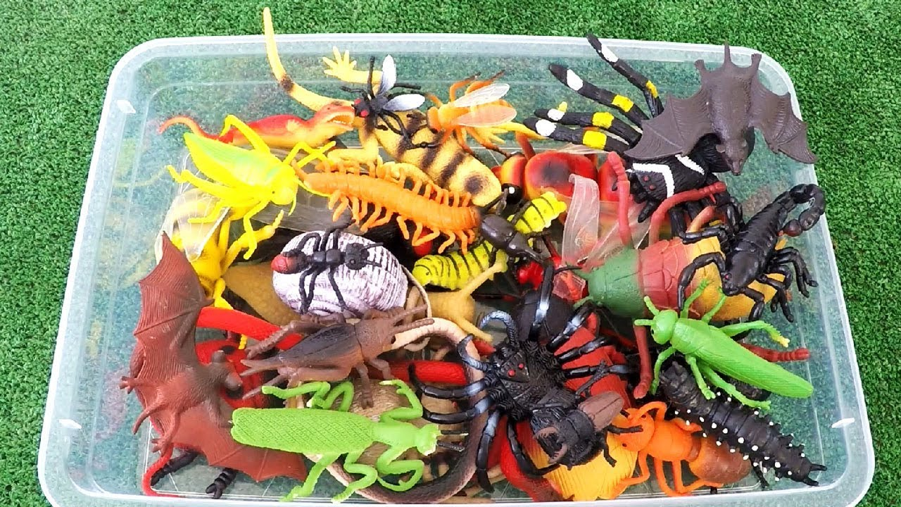 Learn Insects Names and Sounds for Kids - Best Insect Toys ...