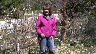 How To Do A Spring Cleanup In The Lawn & Garden