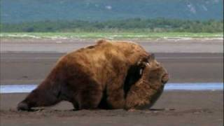 """Grizzly Man - 14. """"Bear Fight"""""""