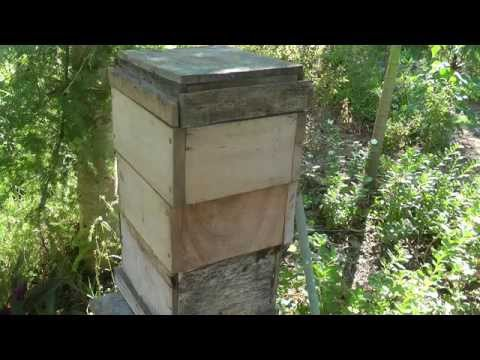 Honey Bees and Beekeeping 7.3: Second season management