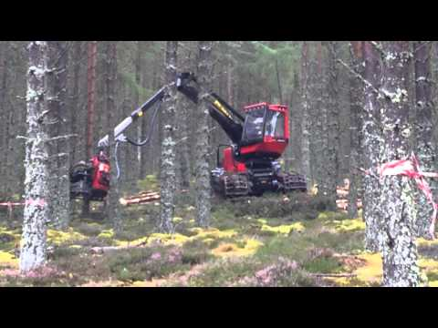 2014 IFAJ Congress - Forestry Thinning
