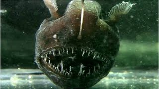10 animales aterradores de las profundidades marinas