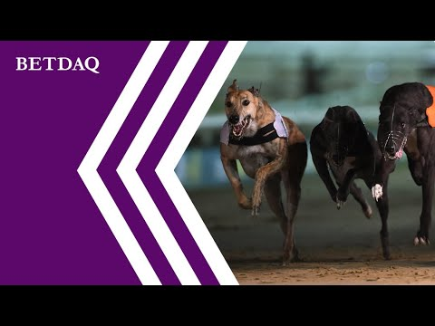 how to bet on greyhounds odds