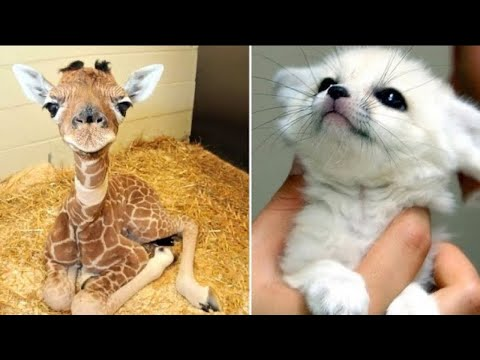 Cute Baby Animals ❤️ Funny Cats and Dogs Compilation #24