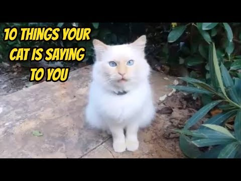 10 Things Your Cat Is Saying To You