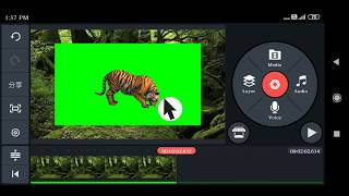 Real Tiger On Green Screen Animals Free