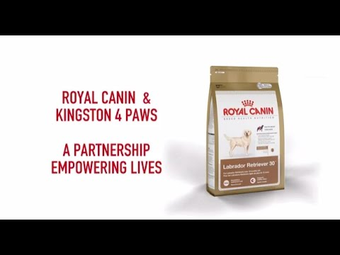 Royal Canin and Kingston 4 Paws a Partnership Empowering Lives