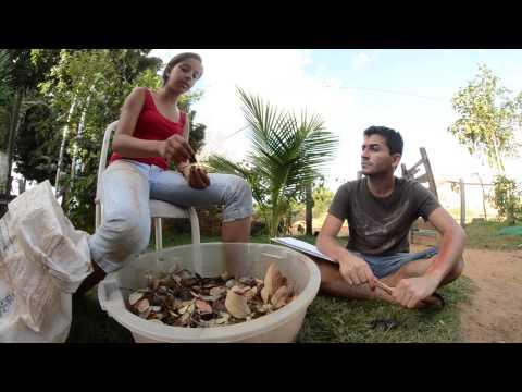 Rede de Sementes do Xingu: Como Manejar Sementes Florestais?
