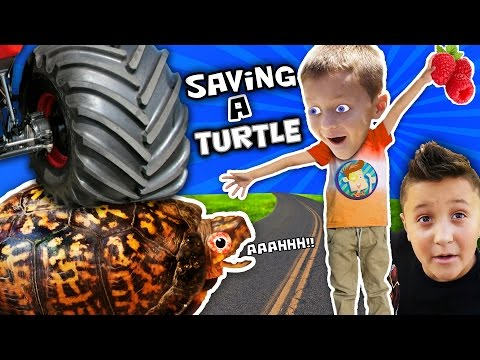 WE SAVED AN INJURED TURTLE!! (FUNnel...