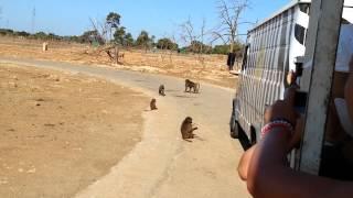 Safari Zoo Mallorca - Affenfütterung