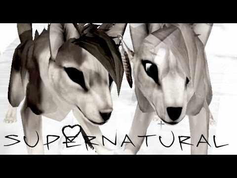 Feral Heart - Supernatural   feat. TheAkitaGeles