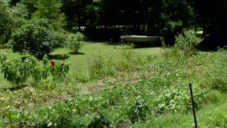 The Home Garden of Sarah Thompson -- Ardmore, OK