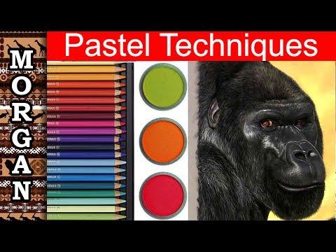 Pastel Pencil Techniques : Drawing a Gorilla : Wildlife Art Jason Morgan