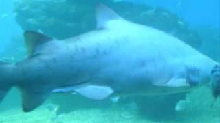 Shark Tank @ Palma Aquarium Majorca, July 2010