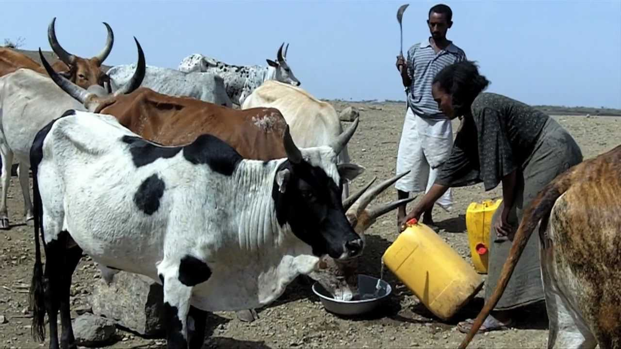 Water in Tigray: a dam shortens the walk