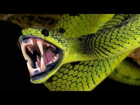 दुनिया के इन 10 सबसे ज़हरीले और खतरनाक सांप से बचके रहना | 10 Worlds Most Venomous Snakes