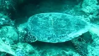 tourisme plongee avec les tortues a mayotte 3320 12