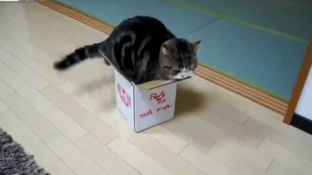 Why Do Cats Like To Get In Boxes