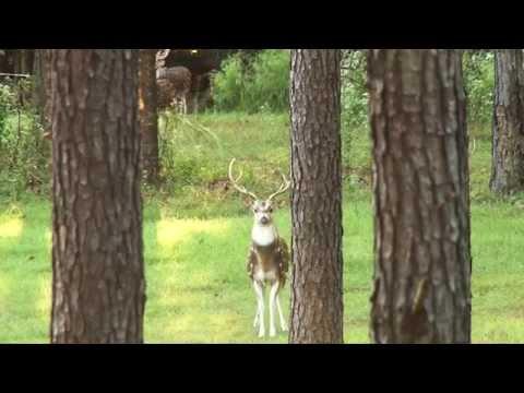 Gum Creek Hunting Preserve