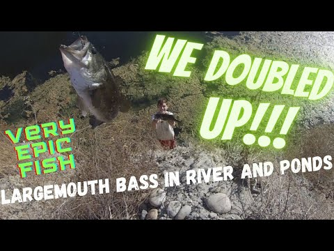 We Doubled Up!!! (Fishing For Largemouth In A River And Ponds.)