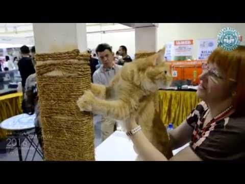 Kelab Kucing Malaysia / Fife / IAMS @Midvalley Pet World Malaysia 2016