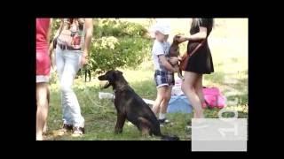 В Саранске состоялась первая выставка бездомных животных
