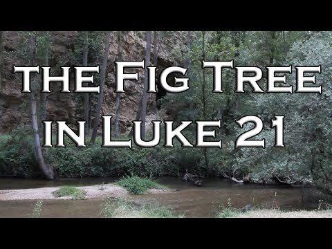 The Correct Meaning Of The Fig Tree In Luke 21 Youtube