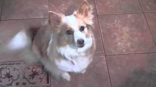 Pet Interviews - Talking Bird, Dog, Cat (teaser)