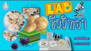 รายวิชาในหลักสูตร BMS ตอนที่ 7 เรียน LAB ชีววิทยามีอะไรบ้างต้องดู