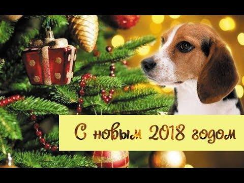 С новым годом!!! Новый год 2018 - год собаки