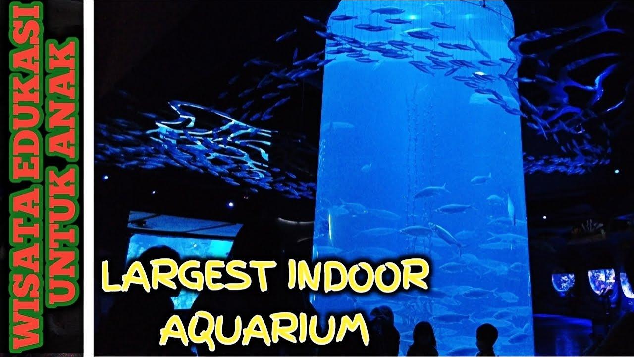 Mini Zoo di Mall ?!? JAKARTA AQUARIUM & SAFARI | WISATA EDUKASI ANAK TK Kindergarten Field Trip 2021