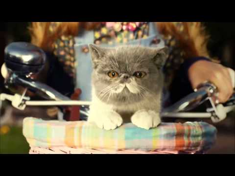 Cannes Lions 2014: Three Mobile, Sing It Kitty  World's best commercials?