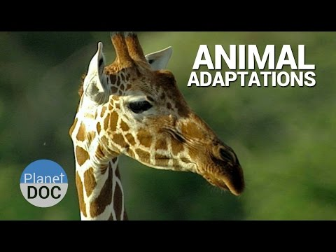 Shaba. Animal Adaptations | Nature - Planet Doc Full Documentaries