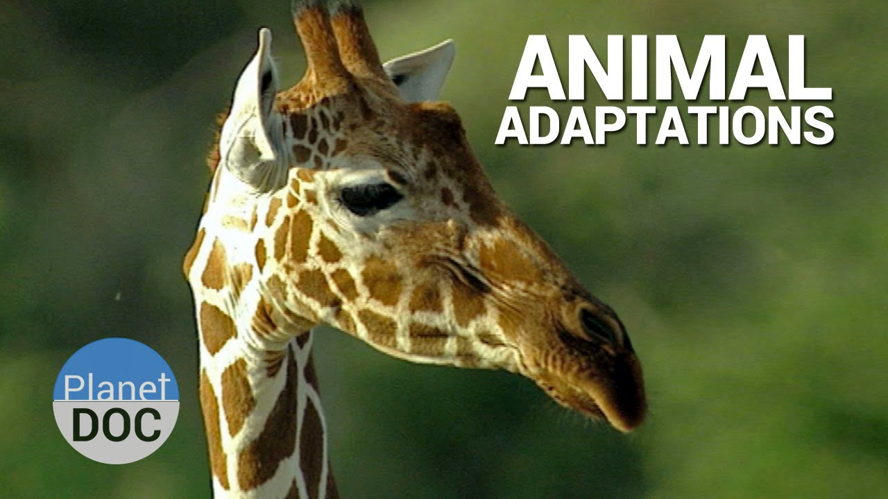 animal adaptation - photo #19