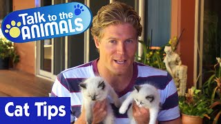 Dr Chris Brown's Best Cat Tips | Talk To The Animals