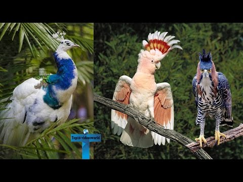 10 Of The Most Amazing And Unique Exotic Birds In The World You Don't Know Actually Exist