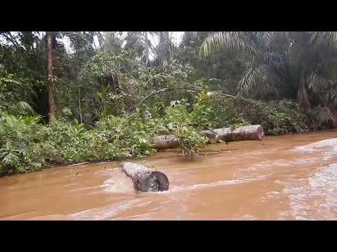 Speedboat on Tortuguero River to Manatus Hotel - Costa Rica Trip (1/2)