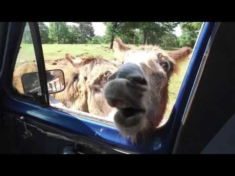 Wheelchair Travel to Wild Animal Safari - Rollin with Kristine - Episode 6