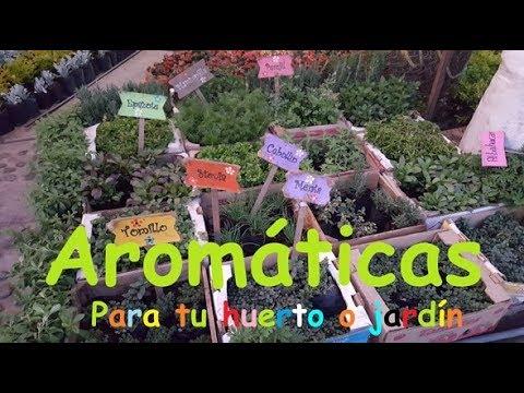 Plantas arom ticas para tu huerta o jard n youtube - Plantas aromaticas jardin ...