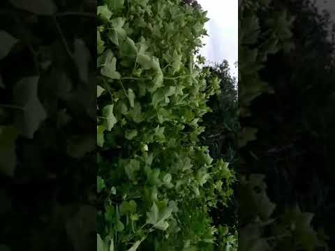 शेतकरी हवाल दिल