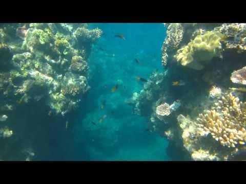 Parrot Fish In Great Barrier Reef Australia