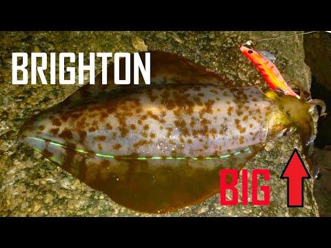 Brighton Pier - Catching BIG Squid !!! (2kg Catch)